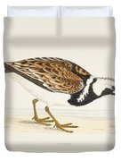 A Turnstone. Arenaria Interpres. From A Duvet Cover