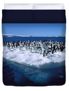 Adelie Penguins On Icefloe Antarctica Duvet Cover by Colin Monteath