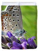 Adonis Blue Butterfly Of Monteriggioni Duvet Cover