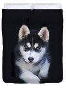 Adorable Siberian Husky Sled Dog Puppy Duvet Cover