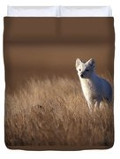 Adult Arctic Fox On The Tundra In Late Duvet Cover
