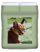 African Caracal Lynx  Duvet Cover