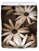 African Daisy Named African Sun Duvet Cover