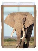 African Elephant Bull Amboseli Duvet Cover