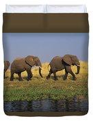 African Elephants, Lake Kariba Duvet Cover