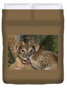 African Lion Cub Wildlife Rescue Duvet Cover
