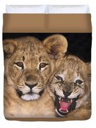 African Lion Cubs One Aint Happy Wldlife Rescue Duvet Cover