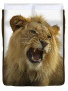 African Lion Male Growling Duvet Cover by San Diego Zoo