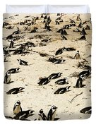 African Penguins Duvet Cover by Oliver Johnston