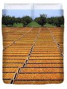 Agriculture - Blenheim Apricots Duvet Cover