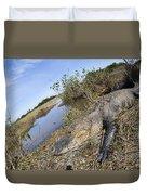 Alligator In Everglades Duvet Cover