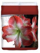 Amaryllis In Bloom Duvet Cover