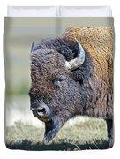 American Bison Closeup Duvet Cover