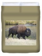 American Bison On The Madison River Duvet Cover
