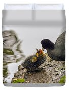 American Coot Feeding Chick Duvet Cover