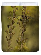 American Goldfinch Eating Seeds Duvet Cover