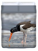 American Oystercatcher Feeding On Clam Duvet Cover