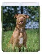 American Pit Bull Terrier Duvet Cover