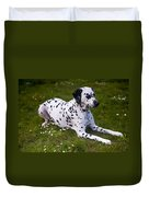 Among The Daisies. Kokkie. Dalmation Dog Duvet Cover
