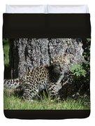 Amur Leopard Cub Antics Duvet Cover