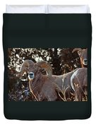 An Icy Stare Duvet Cover