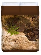 An Isolated Moss Plant Duvet Cover