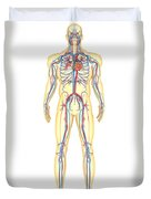 Anatomy Of Human Body And Circulatory Duvet Cover by Stocktrek Images