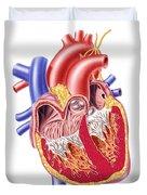Anatomy Of Human Heart, Cross Section Duvet Cover