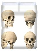 Anatomy Of Human Skull From Different Duvet Cover by Leonello Calvetti