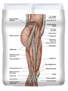 Anatomy Of Human Thigh Muscles Duvet Cover