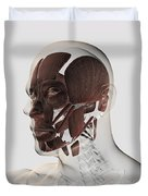 Anatomy Of Male Facial Muscles, Side Duvet Cover