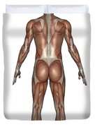 Anatomy Of Male Muscular System, Back Duvet Cover