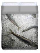 Anchovies,engraulis Moradx, Swim Duvet Cover