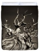 Ancient Bristlecone Pine In Black And White Duvet Cover