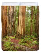Ancient Forest - The Massive Giant Redwoods Sequoia Sempervirens In Redwood National Park. Duvet Cover