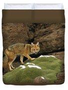 Andean Red Fox Altiplano Bolivia Duvet Cover