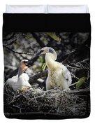 Anhinga Chicks Duvet Cover