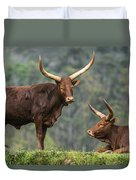 Ankole Longhorns Duvet Cover