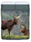 Ankole Longhorn 2 Duvet Cover