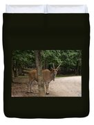 Antelope Behind A Tree Duvet Cover