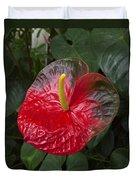 Anthurium Flamingo Flower Beauty Queen Fine Art Photography Print Duvet Cover