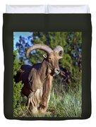 Aoudad Sheep  Duvet Cover