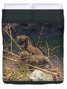 Arabian Leopard Panthera Pardus Cubs Duvet Cover