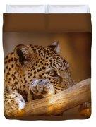 Arabian Leopard Panthera Pardus Duvet Cover