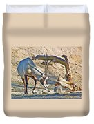 Arabian Oryx In Living Desert In Palm Desert-california Duvet Cover