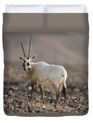 Arabian Oryx Oryx Leucoryx Duvet Cover