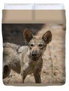 Arabian Wolf Canis Lupus Arabs Duvet Cover