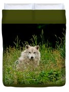 Arctic Wolf Pictures 1172 Duvet Cover