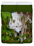 Arctic Wolf Pictures 1228 Duvet Cover
