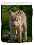 Arctic Wolf Pictures 345 Duvet Cover